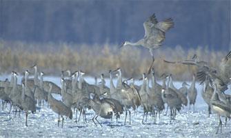 fw-cranes