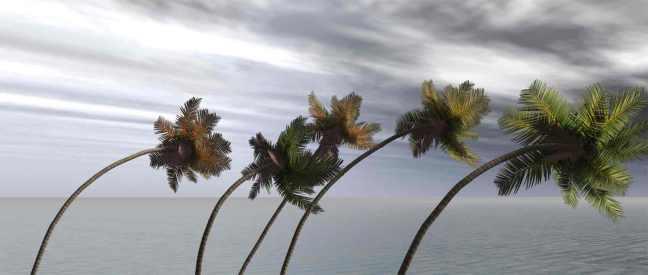 Palm-Trees-Bending